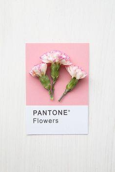 Flowers Pantone