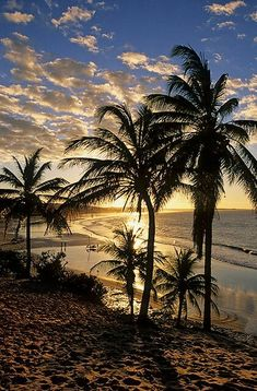 Palm Trees on the Beach at Sunset. Beautiful Sunset, Beautiful World, Beautiful Places, Nature Pictures, Nature Images, Belle Photo, Pretty Pictures, Beautiful Landscapes, Wallpaper Backgrounds