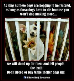 Don't breed or buy dogs! Neuter and spay all your pets. Avoid backyard breeders and pet shops that sell puppy mill dogs. Shelter Dogs, Animal Shelter, Animal Rescue, Rescue Dogs, Save Animals, Animals And Pets, I Love Dogs, Puppy Love, Dog Died