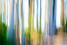 "Saatchi Art Artist Gene Norris; Photography, ""Moving Trees"" #art"