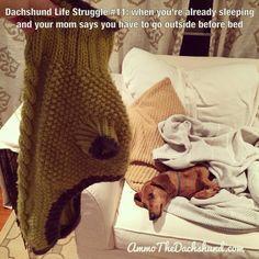 Dachshund Life Struggle #11 // The Struggle is Real // Ammo the Dachshund