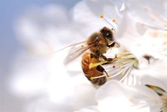 The plan is 'critical to the future of both pollinators and people'