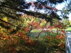 Early Fall colours at Bissell Park Elora ON