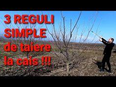 Cum să obții fructe de cais, de cîte 150 GRAME fiecare, și să te bucuri de un pom sănătos [2021] - YouTube Neon Signs, Youtube, Plant, Youtubers, Youtube Movies