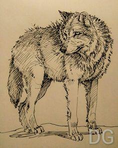 Fountain pen sketch. Wolf