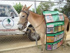 This is a mule disguised as a library. He brings books and literacy to children in remote Venezuelan villages. Mules like him are called Bibiliomulas and they are perfect.