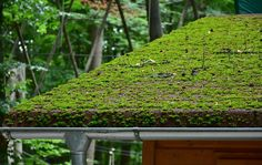 Your roof looks like dirty and you want to clean your roof yourself? No worry about it. Here is some advance guide to remove moss from roof Mousse, Moss Removal, Roof Restoration, Roofing Options, Roof Cleaning, Sea Spray, Budget, Roof Architecture, Homestead Survival