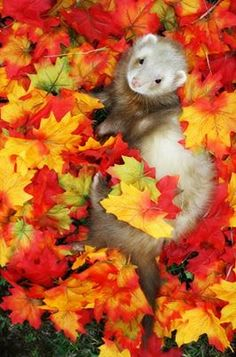 When I was a teenager I wanted a ferret so bad!