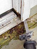 How To Repair A Rotted Door Jamb By Cutting Out Water-Damaged Wood And Installing Wood Blocks