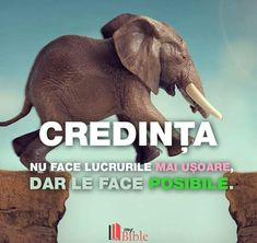 Le Face, Elephant, Christian, God, Animals, Dios, Animales, Animaux, Elephants