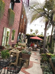 The Succulent cafe. Oceanside, Ca