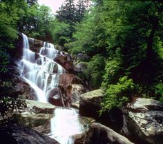 Ramsey Cascades at 100ft is the tallest waterfall in the Great Smoky Mountains National Park