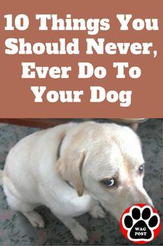 Dog Training Videos, Puppy Training Tips, Training Classes, Clicker Training Puppy, Training Academy, Training School, Crate Training, Dog Health Tips, Pet Health
