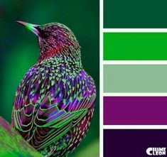 My favorite Green and Purple Color Schemes In Wow Home Design Trend with Green and Purple Color Schemes Purple Color Schemes, Colour Pallette, Color Palate, Color Combos, Best Color Combinations, Bright Colour Palette, Complimentary Color Scheme, Purple Palette, Design Seeds