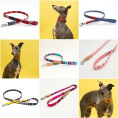 ☀️ ☀️ We are offering a whopping off our collection of vibrant, handmade dog leads. Blue Whippet, Lurcher, Whippets, Summer Sale, Collars, Vibrant, Faces, Dogs, Handmade
