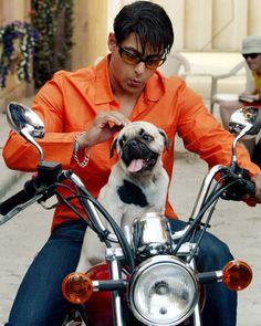 alman Khan pampers Tommy the pug dog..... #SalmanKhan #srk #kareenakapoor #malaikaarorakhan #bollywoodhottie #bollywood #sonakshisinha #jacquelinefernandez #parineetichopra #saree #shraddhakapoor #sonamkapoor #tapseepannu #aishwaryaraibachhan #urvasiratauela #kajalaggrawal #indian #aliabhatt #nargisfakri #kritisanon #sunnyleone #deepikapadukone #dishapatani #katrinakaif #illeanadcrouze #eshagupta #tammanabhatia #anushkasharma #priyankachopra #prachidesai