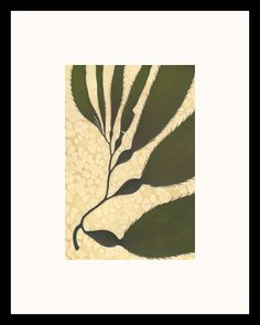 :::: PINTEREST.COM christiancross ::::Pressing Seaweed