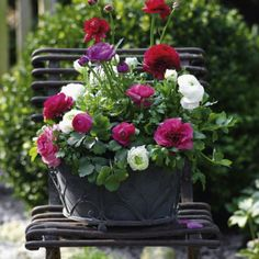 Pflanzideen ▷ Balcony boxes - ideas for all seasons to transplant, # balcony boxes # for House Plants Decor, Plant Decor, Balcony Garden, Garden Pots, Garden Ideas, Flower Vases, Flower Pots, Petunias, Foliage Plants