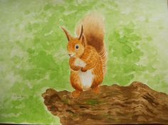 Welcome to LindysArtshop. You are viewing an original watercolour painting of a red squirrel. The painting is all hand drawn and hand painted, starting with the very first pencil sketch and colour wash right through to the finer brushstrokes. The watercolour is large A3 size (420mm x 297mm), and is painted on 300gsm fine grain acid free cold pressed artists paper using Winsor & Newton watercolour paints and brushes. It is signed and dated on the front and back and is unmounted and unframe... Watercolour Drawings, Watercolour Painting, Winsor And Newton Watercolor, Wildlife Paintings, Red Squirrel, Wild Birds, Original Paintings, How To Draw Hands, Hand Painted