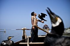 comorat fishing in china | Cormorant Fisherman, China - National Geographic Photo Contest 2011 ...