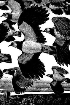 Lapwings by Charles Tunnicliffe for The Sky's Their Limit 1938. Wood engraving