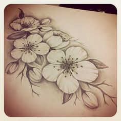Cherry blossoms drawing sketch flowers