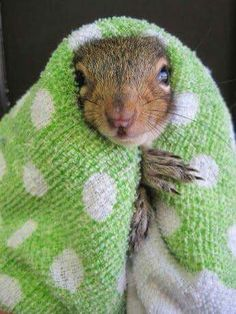 And here's Sassy, auditioning for the role of Tzeitel in the all-squirrel production of 'Fiddler on the Roof' ... :-D