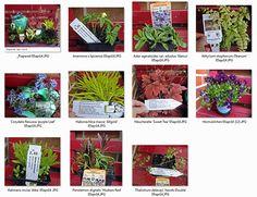 """Neu gekaufte Pflanzen sofort mit Etikett fotografieren. Die Fotos in einem PC-Ordner ablegen, z.B. """"Neue Pflanzen 2015"""".   Gartenplanung & Gartenberatung in Hamburg  www.sandfrauchen.de"""