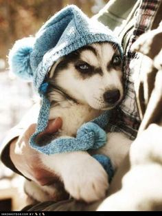 Cyoot Puppy ob teh Day: It's Getting Cold Outside