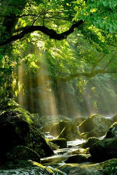 Landscape pictures nature rivers New Ideas Beautiful Places, Beautiful Pictures, Kumamoto, Nature Pictures, Images Of Nature, Spiritual Pictures, Forest Pictures, Landscape Pictures, Amazing Nature