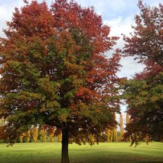 "Instagrammer littlebig_dd was ""chasing leaves"" in Narrabundah, Canberra"