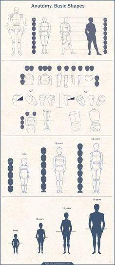 Anatomy Basic Shapes by Azot-2013 on deviantART