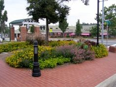 Cameron Village Commercial Landscape Design, Commercial Landscaping, Flower Beds, Colorful, In This Moment, Garden Beds, Flowers Garden