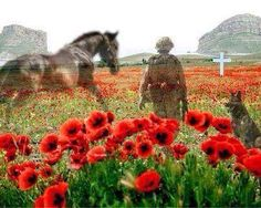 Armistice Day - the eleventh hour of the eleventh day of the eleventh month of Lest we forget. Remembering all the horses and dogs who have given their lives in times of war. Remembrance Day Images, Remembrance Day Poppy, Horses And Dogs, Wild Horses, Lest We Forget Anzac, Armistice Day, Flanders Field, Military Art, Military Quotes