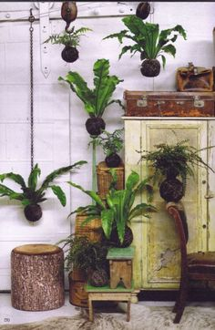 Kokedama decoracion organica plants