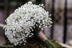 Gypsophila Gypsophila, Bride Bouquets, Hotel Wedding, Wedding Flowers, Brides, Photography, Bridal Bouquets, Photograph, Fotografie