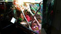 Aquarium, Morelia, Aquarius, Fish Tank