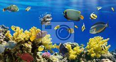 Fotobehang Koraal en vissen