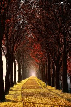 Wonder Curve in Most Impressive Pictures of Trees