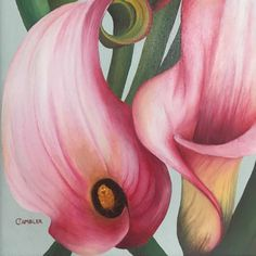 pink green calla lily painting by Charlotte Ambler Beautiful Paintings Of Flowers, Lily Painting, Green Backgrounds, Calla Lily, Gray Background, Botanical Art, Green And Grey, Original Art, Charlotte