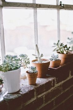 cacti plants green house outdoors window light bright open space interior bricks exposed airy