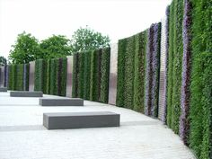 Living wall by Scotscape Living Walls