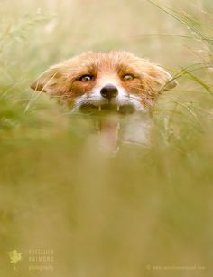"<a href=""http://www.roeselienraimond.com"">Roeselienraimond.com</a> 