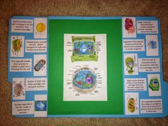 Enhance your child& science education with an engaging, fun plant and animal cell lapbook. 7th Grade Science, Middle School Science, Science For Kids, Life Science, Science Labs, Weird Science, Science Fun, Science Ideas, Biology Classroom