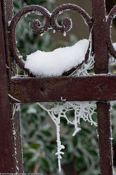 Rustic Winter Gate