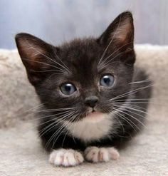 What a beautiful little kitty.