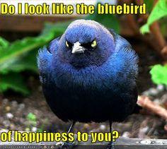 bluebird-of-happiness - http://yourvibration.com/pix/18048/