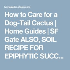 How to Care for a Dog-Tail Cactus   Home Guides   SF Gate ALSO, SOIL RECIPE FOR EPIPHYTIC SUCCULENTS