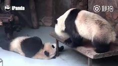 Pandas are weird - 9GAG
