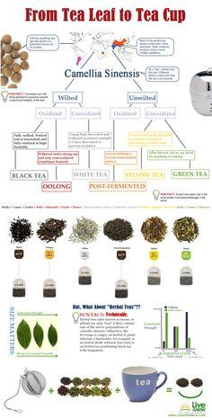 Tea leaf to tea cup